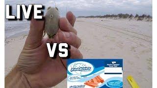 Download Surf Fishing- Fish Bites VERSUS LIVE Bait Video