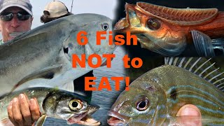 Download 6 Saltwater FISH you should NOT try to eat! Video