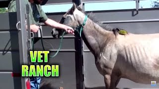 Download Pregnant Horse Rescued from Auction and Slaughter Video