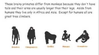 Download Primate Classification Video