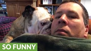 Download Bulldog reacts to owner who says no Video