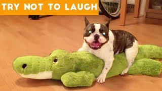 Download Cute Funny Dogs & Cat Videos Animals Compilation | Funny Pet Videos June 2018 Video
