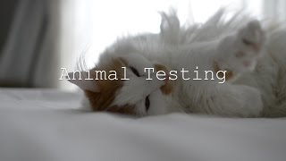 Download Animal Testing Documentary Video
