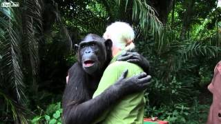 Download L' abbraccio commovente dello scimpanzé Wounda a Jane Goodall Video