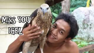 Download Release of eagle touching HD ( Pelepasan Elang Laut ) Video