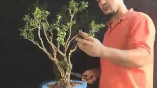 Download Angello (Buxinho) vídeo 1 Video