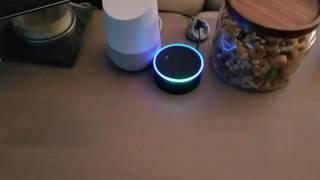 Download Echo/Google Home infinite loop Video