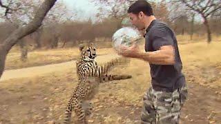 Download Cheetahs Play Football | Deadly 60 | Series 3 | BBC Video
