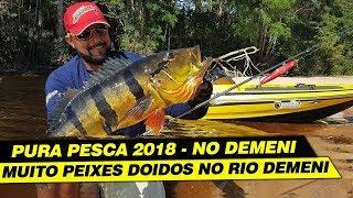 Download PEIXE DOIDO NO DEMENI , SÓ DEMÔNIO!!!!! Video