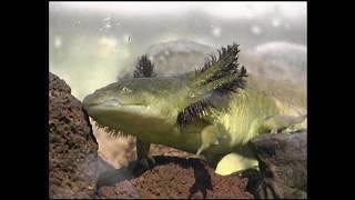 Download Axolotls Video