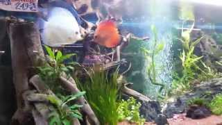 Download Tienda De Peces (Acuario Madrid) Video