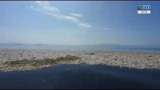 Download Nell'Oceano Pacifico galleggia un'isola di plastica grande 3 volte la Francia Video