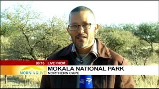 Download Mokala National Park turns a decade Video
