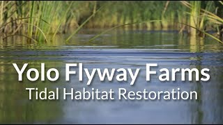 Download Yolo Flyway Farms Tidal Habitat Restoration Video