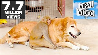 Download Monkey and Dog Friendship Video