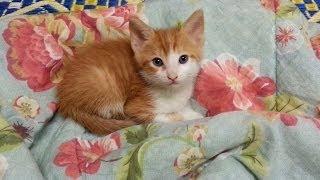 Download My New Baby Kitten~ Video