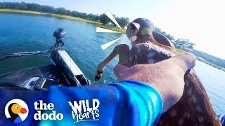 Download Guy Rescues Baby Deer From the Middle of a Lake | The Dodo Wild Hearts Video