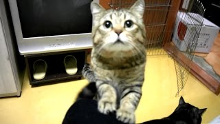 Download 부르면 오는 고양이 I can call my cat 呼んだとき来る猫 Video