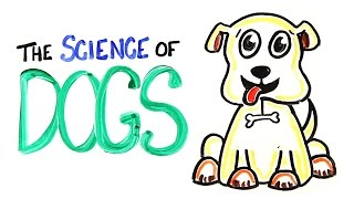 Download The Science of DOGS Video