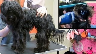 Download Dog Matted Grooming Does It Hurt Your Dog Video