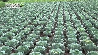 Download Entrevista Ministro de Agricultura de Guatemala Video