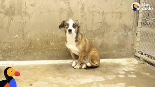 Download Scared Dog Never Wagged Her Tail Until She Met Her Foster Dad - BLOSSOM | The Dodo Video