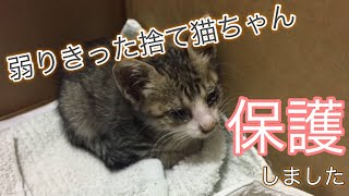 Download 弱りきった捨て猫を保護しました Discarded has protected the cat Day 1 Video
