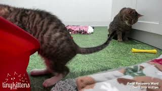 Download Kittens gone wild... with Uncle Mirok and a Shelly visit! TinyKittens Video