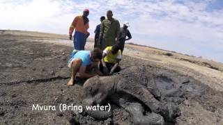Download Elephant Calf Rescue Video