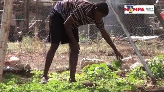 Download NAMPA: DORDABIS Small scale farmers optimistic (crop )17 May 2016 hd Video