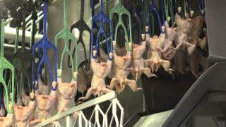 Download An Inside Look at U.S. Poultry Processing Video