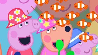 Download Peppa Pig English Episodes | The Great Barrier Reef | Peppa Pig Official Video