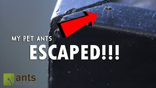 Download OMG! My Pet Ants Escaped Into My Home Video