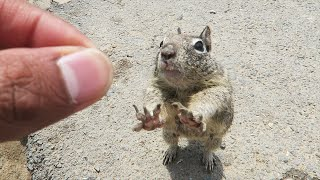 Download HOW TO TOUCH A SQUIRREL! Video