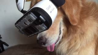 Download Dog Tries VR Video