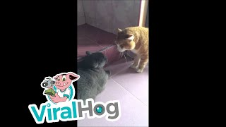 Download These Cats Have A Lot To Say || ViralHog Video