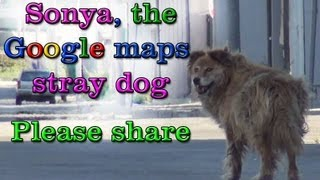 Download Sonya, the Google maps stray dog rescue. Please share. Video