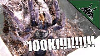 Download 100k FEEDING! Video