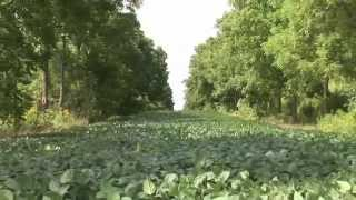 Download 6. Canadian Intercropping Project Research Results video Video