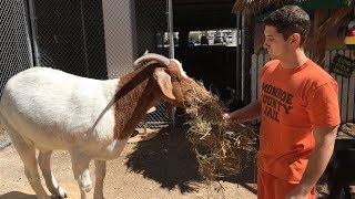 Download The Prison Inmates Who Run A Zoo Video