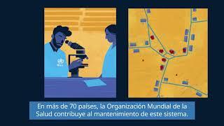 Download OMS: El sistema de vigilancia de la poliomielitis Video