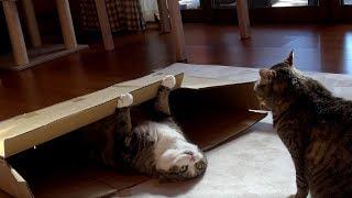 Download スリムな大きな箱とまるとはな。-The slim large box and Maru&Hana.- Video