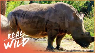 Download Austin Stevens Adventures - Armoured Giants [Documentary Series] | Wild Things Video