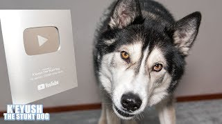 Download Telling My Dog He's On Youtube! He FLIPS Silver PlayButton! Video