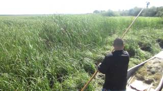 Download White Earth Wild Rice Harvest- Manoominikewag Video