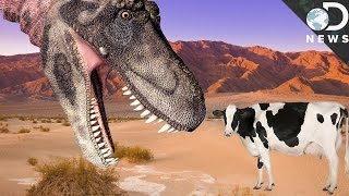 Download Why Aren't Modern Animals As Large As Dinosaurs? Video