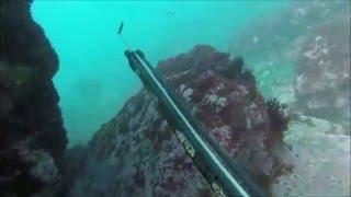 Download Pesca Submarina - Peniche || - Portugal 2016 Video