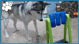 Download DOGGY IQ TEST Level 2! - How Smart Is My Dog? (fixed) Video
