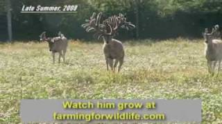 Download World Record Buck: Largest Whitetail EVER Video