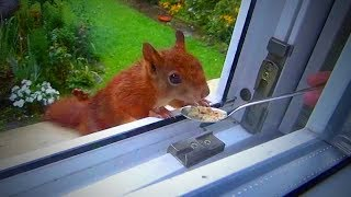 Download Cute Squirrels 😍 Funny and Cute Squirrels Playing (Full) [Funny Pets] Video